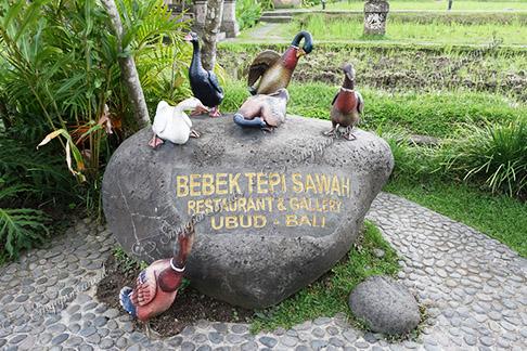 Bebek Tepi's Ducks